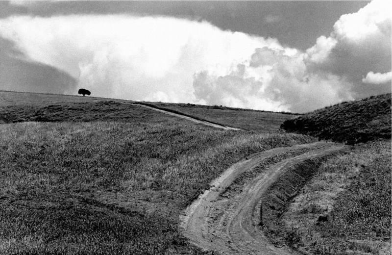'Un zigzag vital' de Abbas Kiarostami