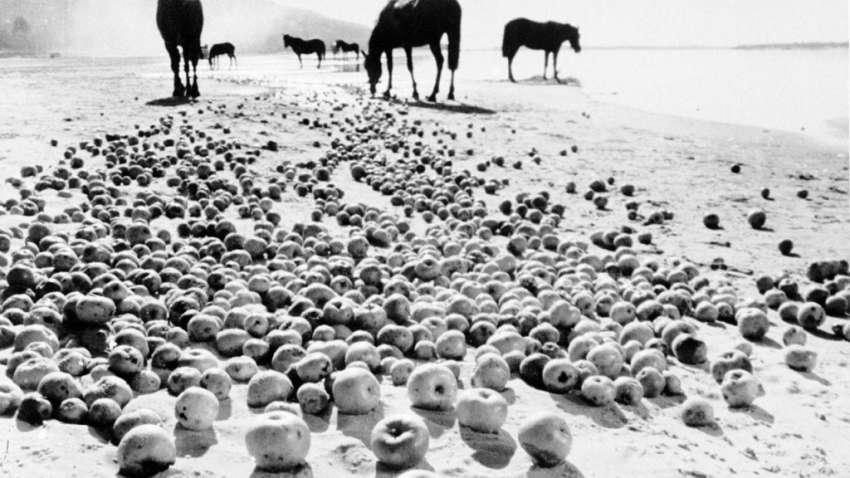 'La infancia de Iván, de Andrei Tarkovski