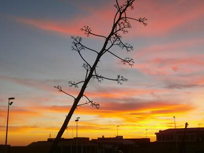 """Fotografía finalista en el concurso de """"Cuentos para el Andén"""" Título: """"Una escalera inclinada hacia el cielo"""". Autora: Rosa María García Suárez"""