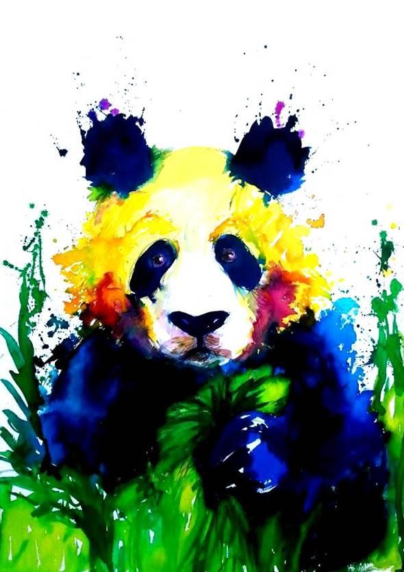 paloma-bey-2-Panda