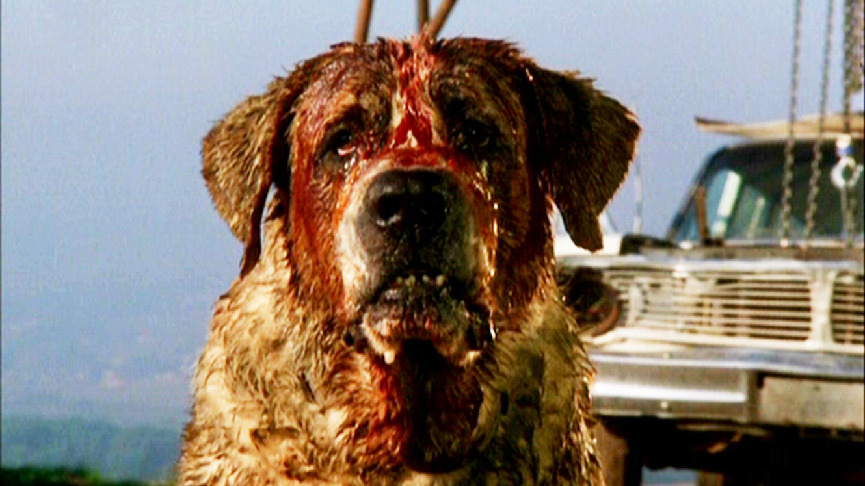 Las 10 criaturas más terroríficas creadas por Stephen King